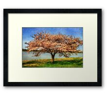 Cherry Tree Framed Print