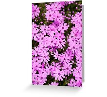 Pink Phlox Flower Art Greeting Card