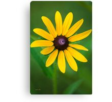 Rudbeckia Flower Art Canvas Print