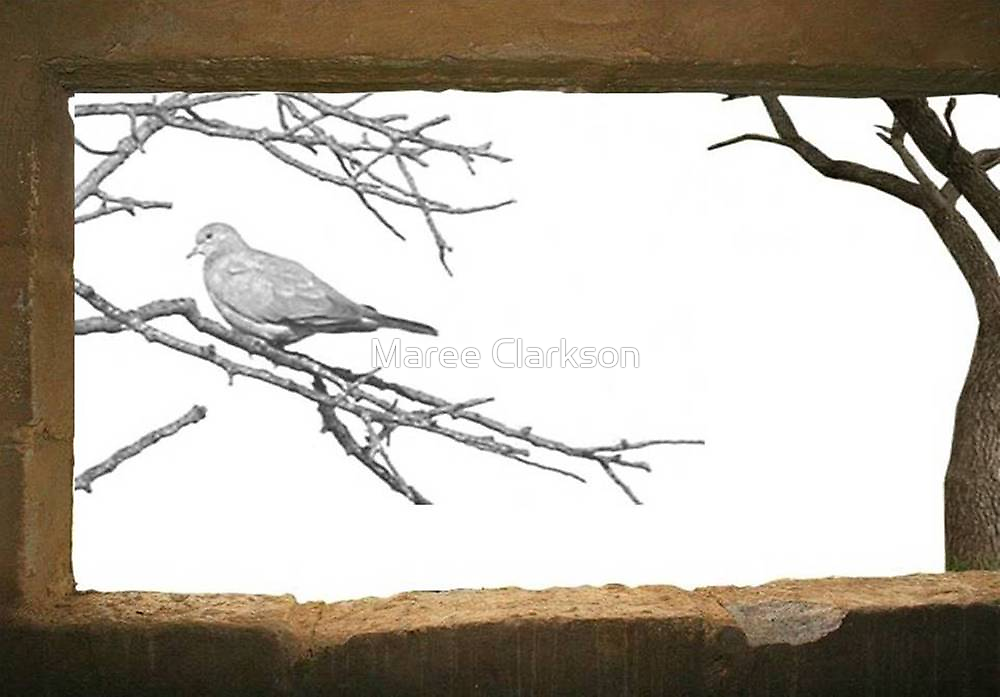 Looking through my window... by Maree  Clarkson