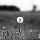 I've lost my focus by Jason Dymock Photography