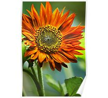Orange Sunflower Art Poster