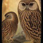 Owl 2 by Norella Angelique