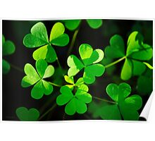 Green Clover Abstract Poster