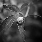 Snail on leaf by Henrik Hansen