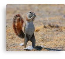 Cape Ground Squirrel Canvas Print