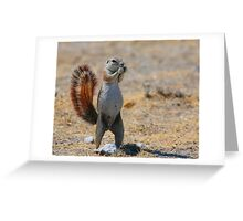 Cape Ground Squirrel Greeting Card