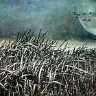Dark Moon Rising by Margi