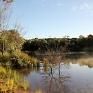 Rising Mist at Companys Dam   GRENFELL NSW by julie anne  grattan
