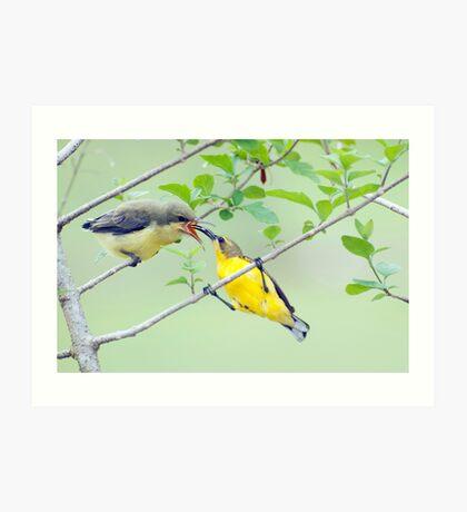 Grubs Up - sunbird feeding babes  Art Print