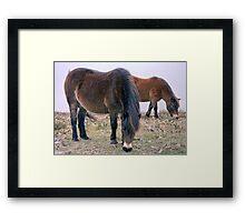 Exmoor Ponies Framed Print