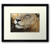 You can come closer i am not hungry ! Framed Print