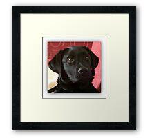 My dog Framed Print