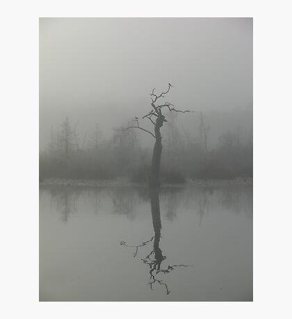 The Bird Tree Photographic Print