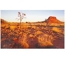 Spinifex, Sand, Sunset, Desert Oak and Stock Route. Photographic Print