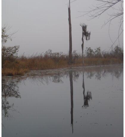 fog,Econfina Creek,wasp tree,cypress,swamp Sticker