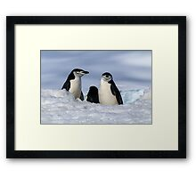Antarctic Locals Framed Print