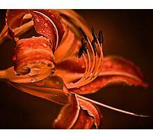 Orange Flower Photographic Print
