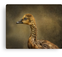 Gosling Profile Canvas Print