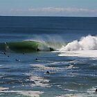 Shark Island Line up on Big Friday by Andrew  MCKENZIE