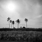 Coconut trees at Kerala, India by Neha Singh
