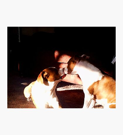 Buster and Sweetie soo in love Photographic Print