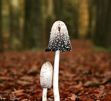 Inkcap Mushrooms by Coenraad Heijdemann