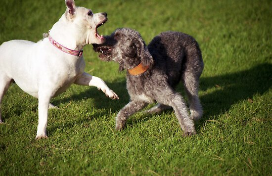 Playtime with Barney by Michael Haslam