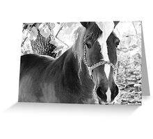 Horse in Black and White Pencil Greeting Card