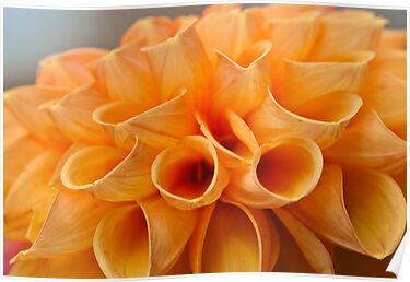 Tubular Petals by Ray Clarke