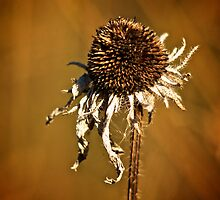 Earth tone flower by Andre Faubert