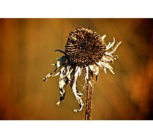 Earth tone flower Photographic Print
