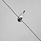 Bird On A Wire by Andrea Hurley