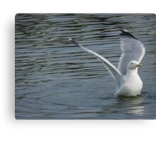 Feathered Beauty Canvas Print
