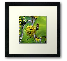 Who is going to sting who? Framed Print