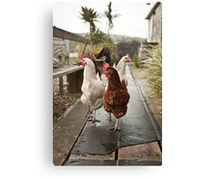 Chickens at Large Canvas Print