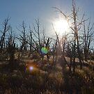 Mesa Verde Forest by LizzieMorrison