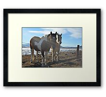 Colorado Horses Framed Print