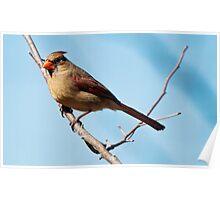 I Am A Pretty Bird Poster