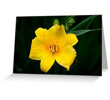 Yellow Daylily Flower Art Greeting Card