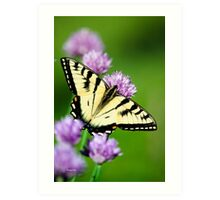 Eastern Tiger Swallowtail Butterfly Art Art Print