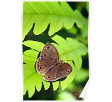 Little Wood Satyr Butterfly Art Poster