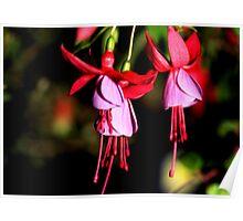 Red & Mauve Fuchsia Poster