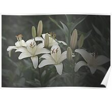 Lilies in the mist Poster