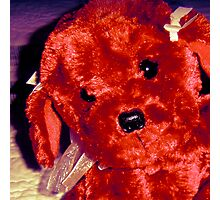 Teddy's Friend, Lolly-Pup Photographic Print