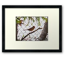 Waiting out the snowstorm Framed Print