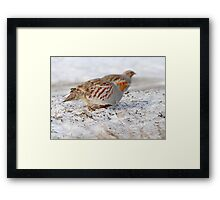 Today's Forecast: Overcast with Periods of Gray Partridge ;) Framed Print
