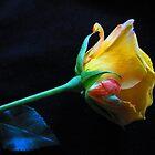 Yellow Rose Of Brooklyn by Mistyarts