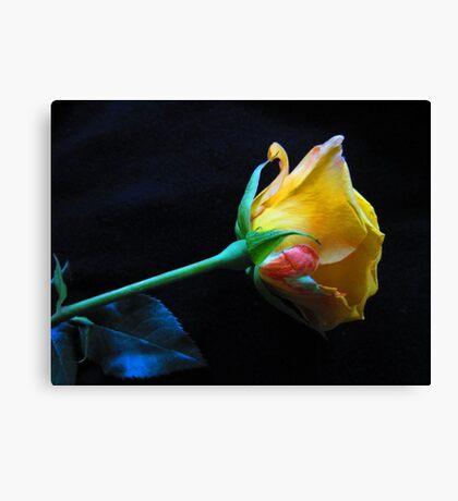 Yellow Rose Of Brooklyn Canvas Print