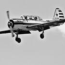 ''Yak 52'' by bowenite